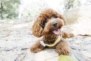 cute-doggy